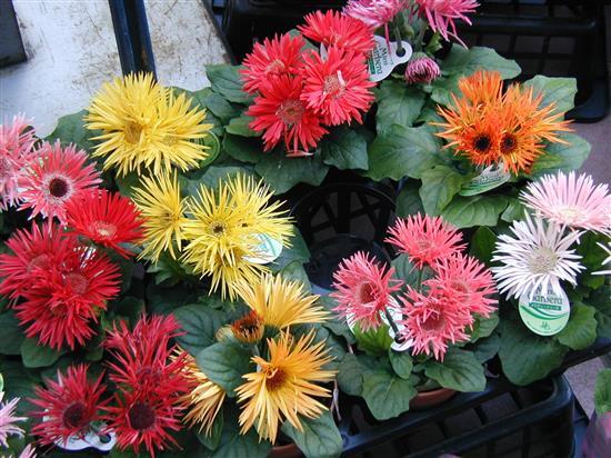 flower_P1010155a.jpg