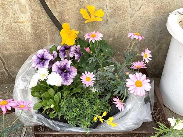 flowers_0717a.jpg