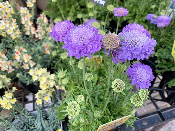 flowers_0773a.jpg