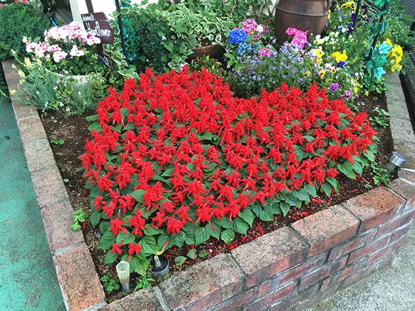 flowers_1524b.jpg