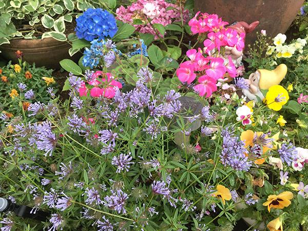 flowers_1529b.jpg