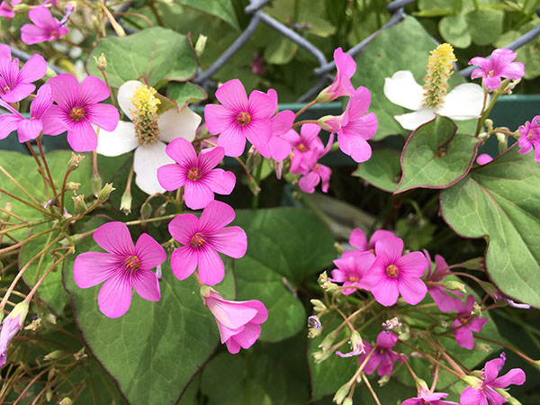 flowers_1692a.jpg