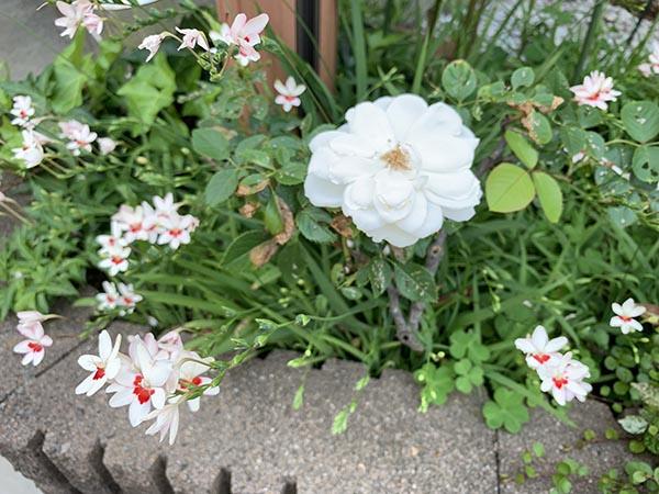flowers_3223a.jpg