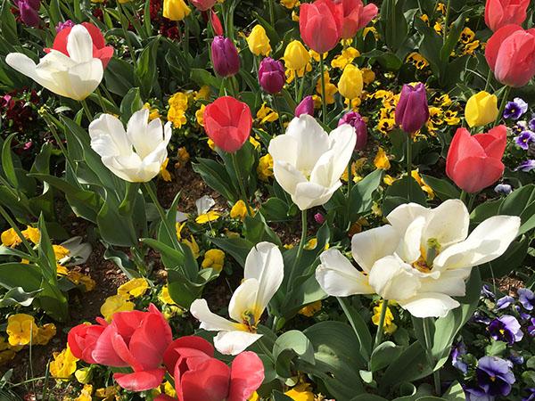 flowers_7852b.jpg