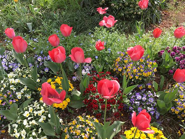 flowers_7858b.jpg