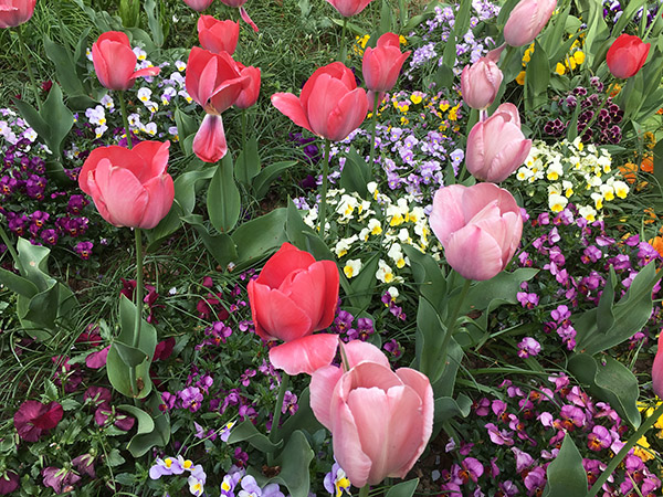 flowers_7888b.jpg