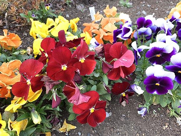 flowers_9735a.jpg