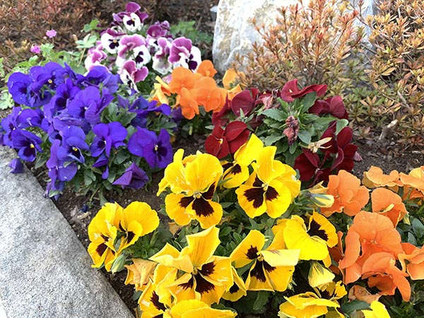 flowers_9736a.jpg