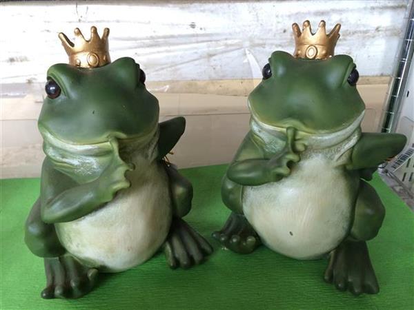 frog_174a.jpg