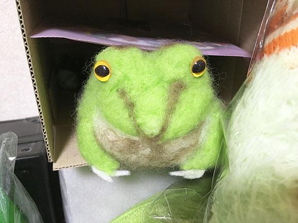 frog_2454b.jpg