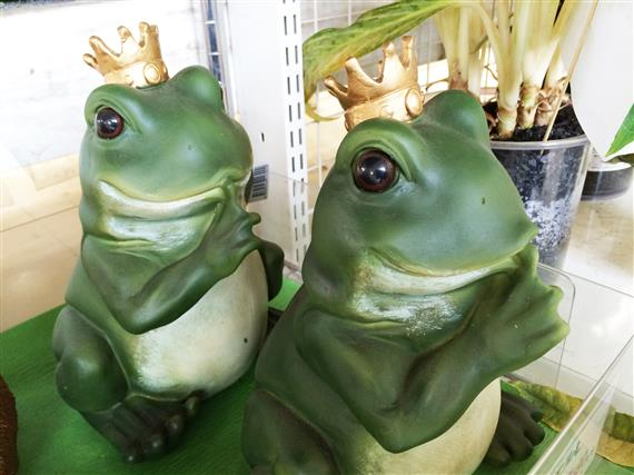frog_4659a.jpg