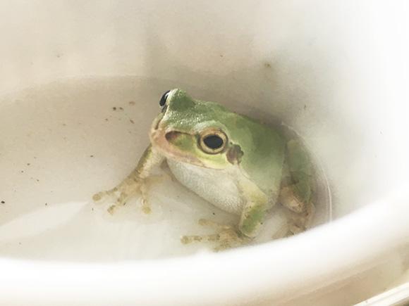 frog_9285b.jpg