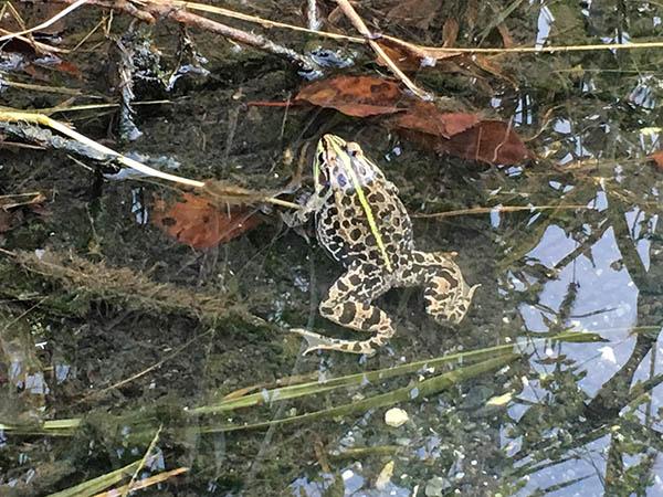 frog_9723a.jpg