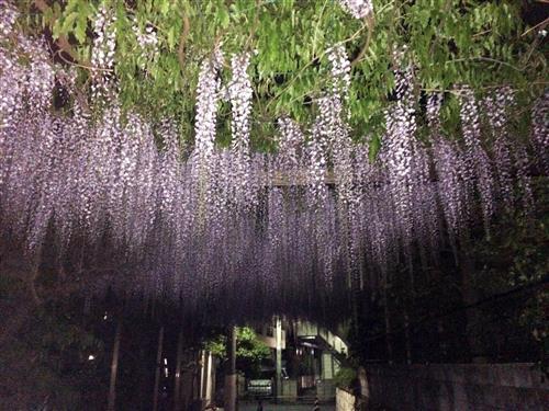 fuji_3981a.jpg