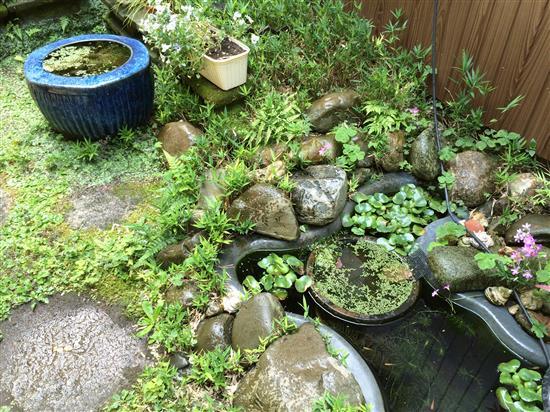 garden_038a.jpg