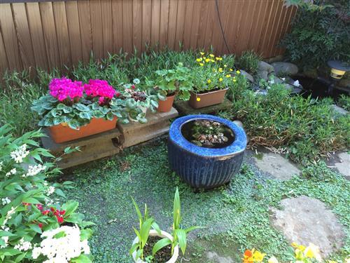 garden_6171.JPG