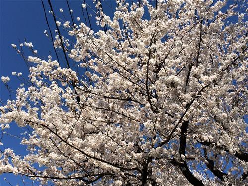 higashikurume_4693.JPG