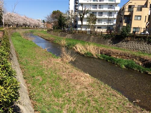 higashikurume_4713.JPG