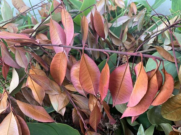 leaf_2314a.jpg