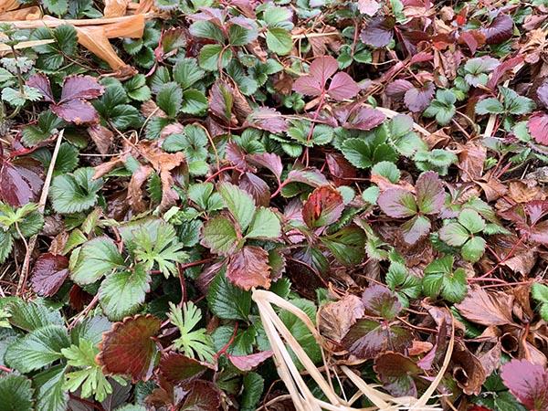 leaf_8688a.jpg
