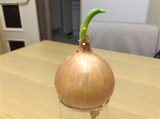 onions_007b.jpg