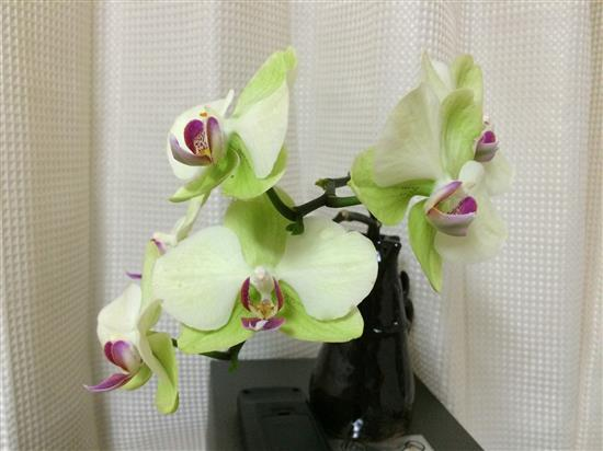 orchid_014a.jpg