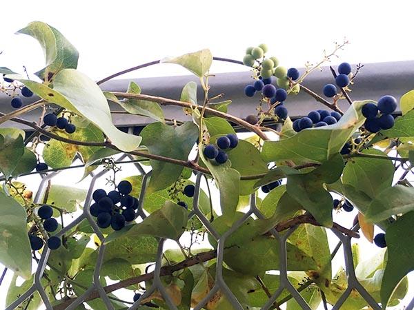 plant_1387b.jpg