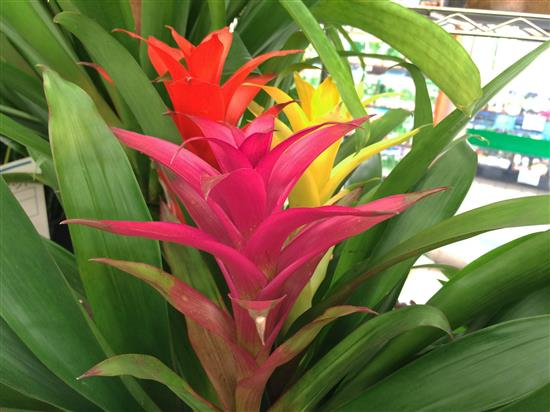 plant_142a.jpg