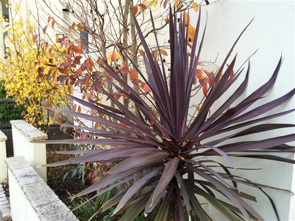 plant_190a.jpg