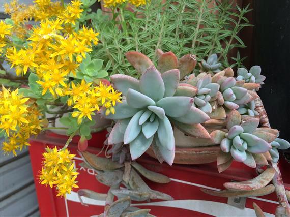 plant_232b.jpg