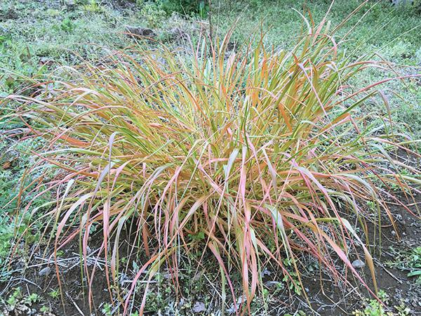 plant_8683d.jpg