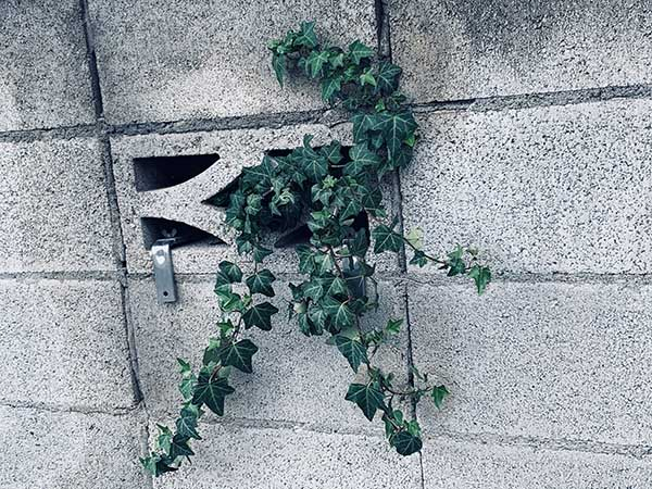 plant_E1777a.jpg