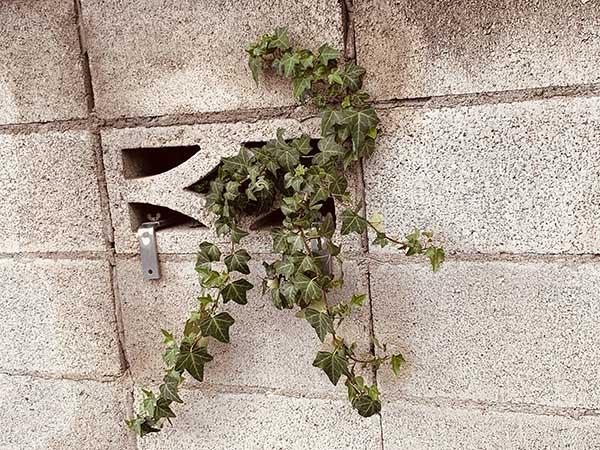 plant_E1779a.jpg