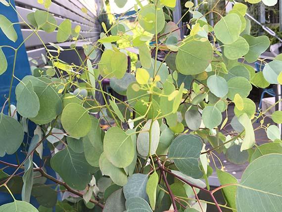 plants_1966c.jpg