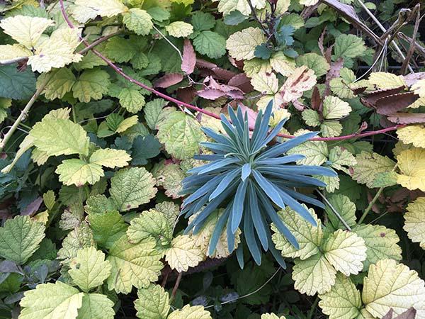plants_4329a.jpg