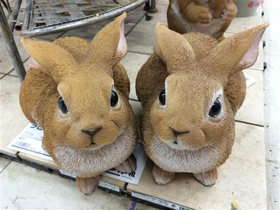 rabbit_066a.jpg