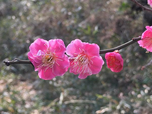 shakujii_5633b.jpg
