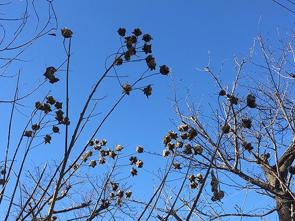 sky&plant_5764a.jpg