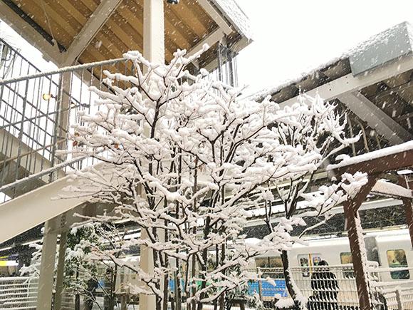 snow2018_3426b.jpg
