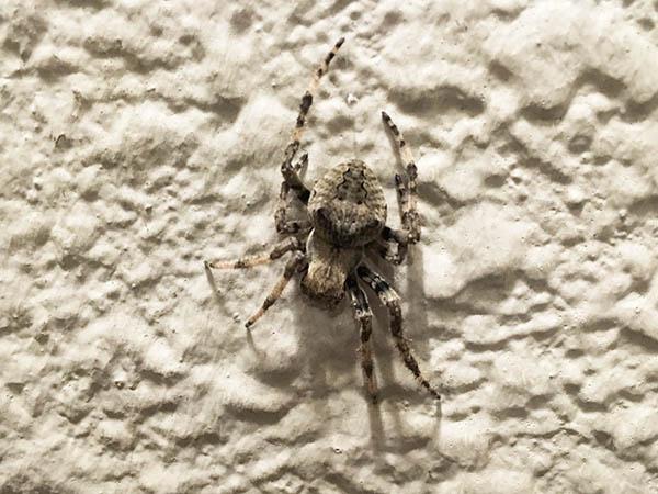 spider_7354a.jpg