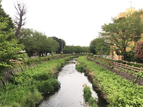 stream_8386a.jpg