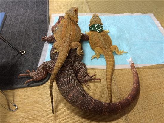 towa-hinata-akatsuki_027a.jpg