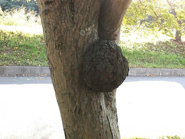 tree_9762a.jpg