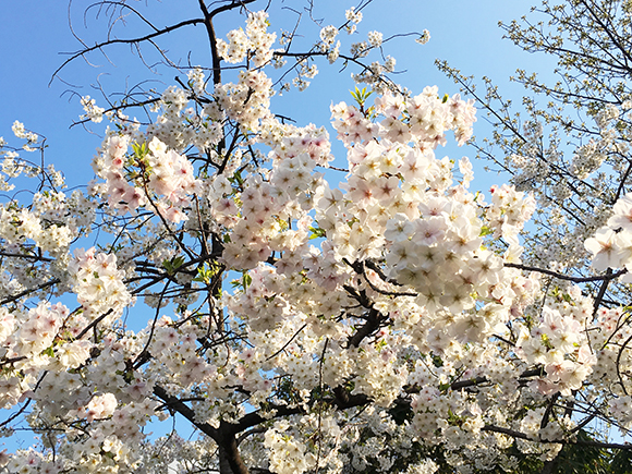ueno_7012b.jpg