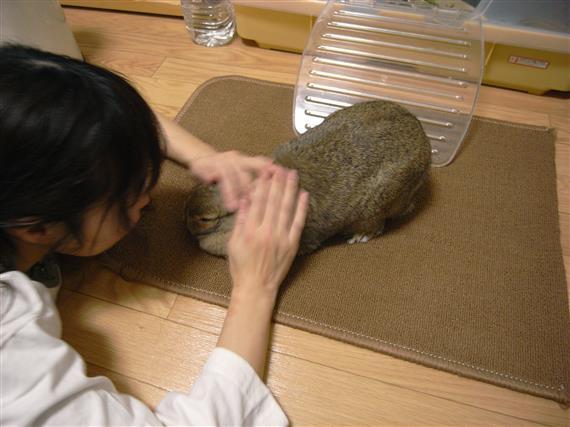 yuppie-chimaki_RIMG0264a.jpg